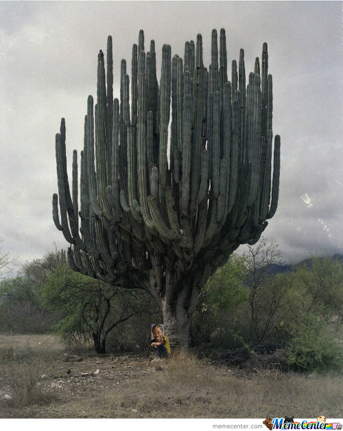 Yo Dawg, I Heard You Like Cactii