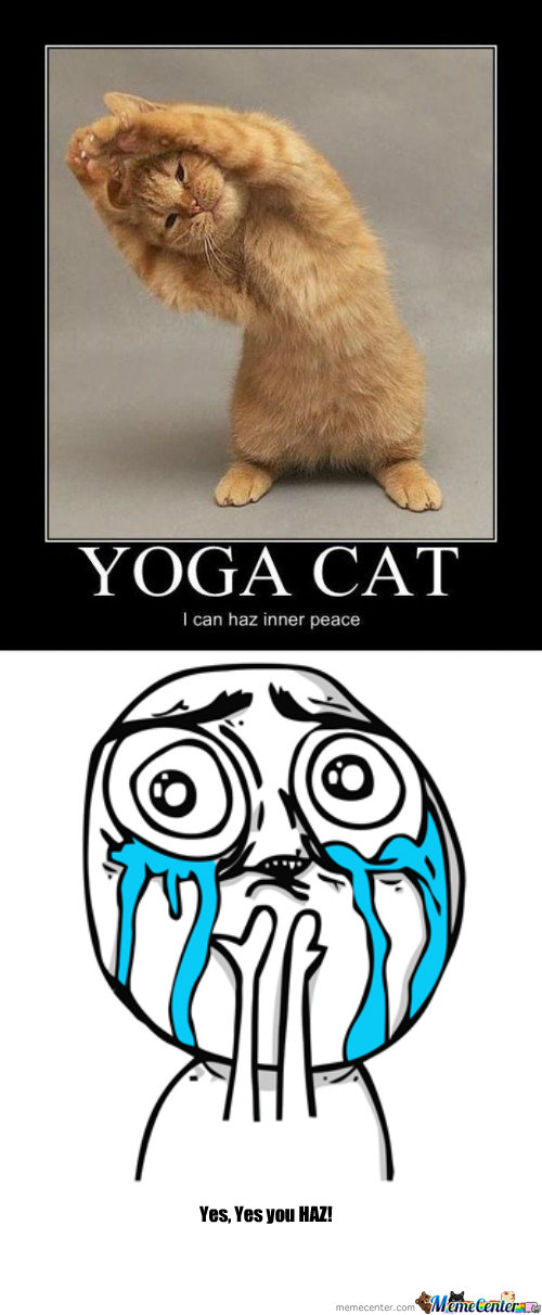 Yoga Cat By Karhadkarameya Meme Center