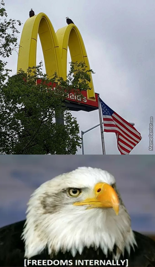 You Cant Find More Freedom In Any Other Place Than America