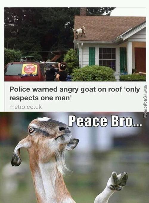 You Have Goat To Be Kidding Me Officer